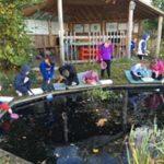 Pond Dipping at Crawfordsburn
